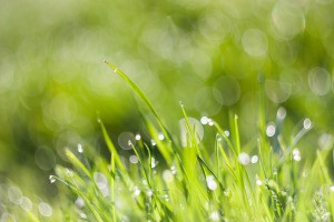 Environmental Benefits of a Green Cleaning Program | SparkleTeam